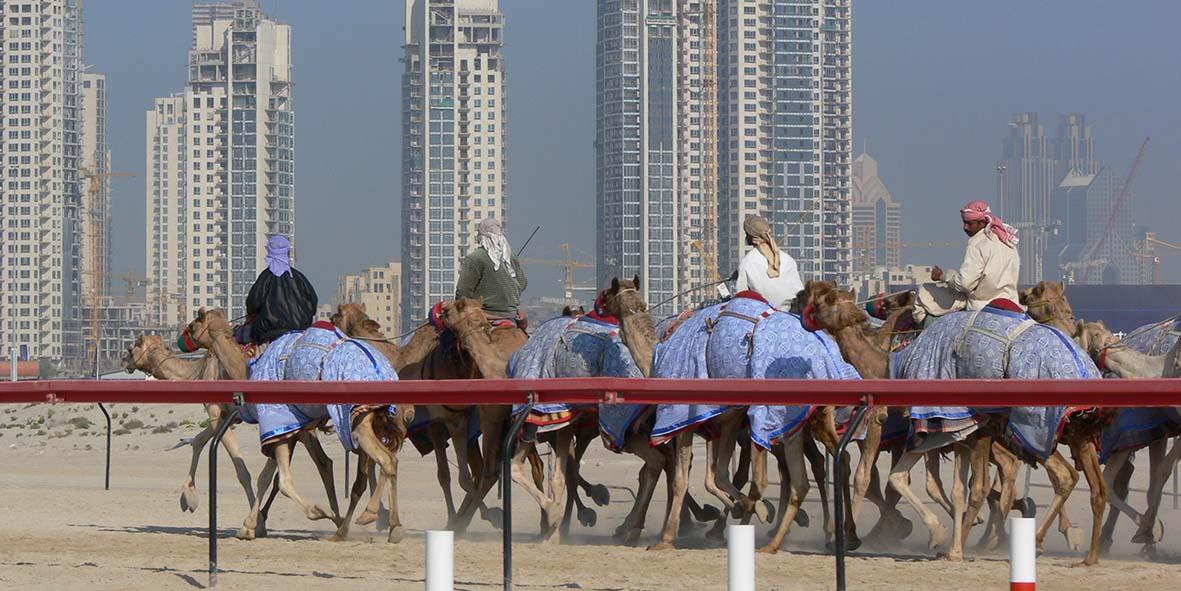 Dubai carrera camellos