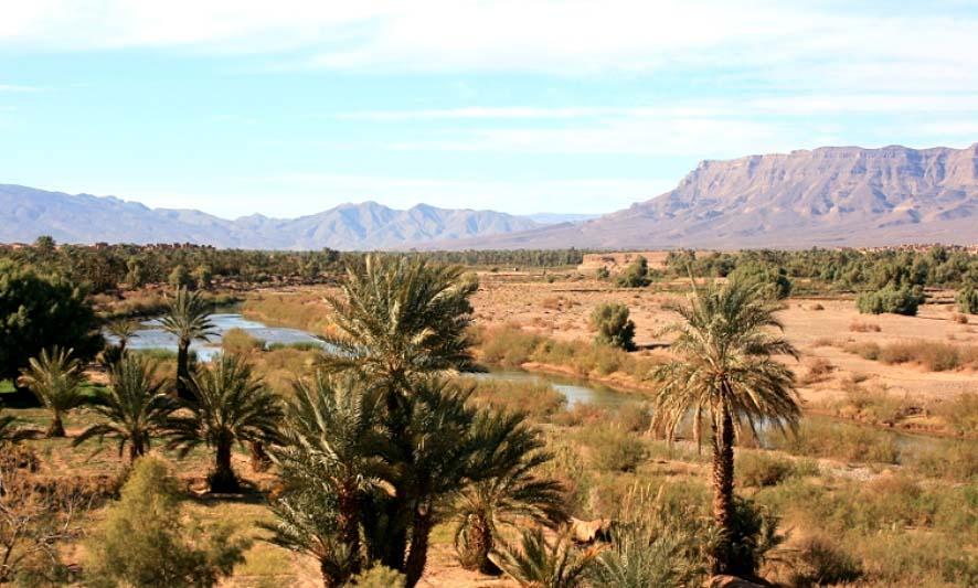 valle palmeras