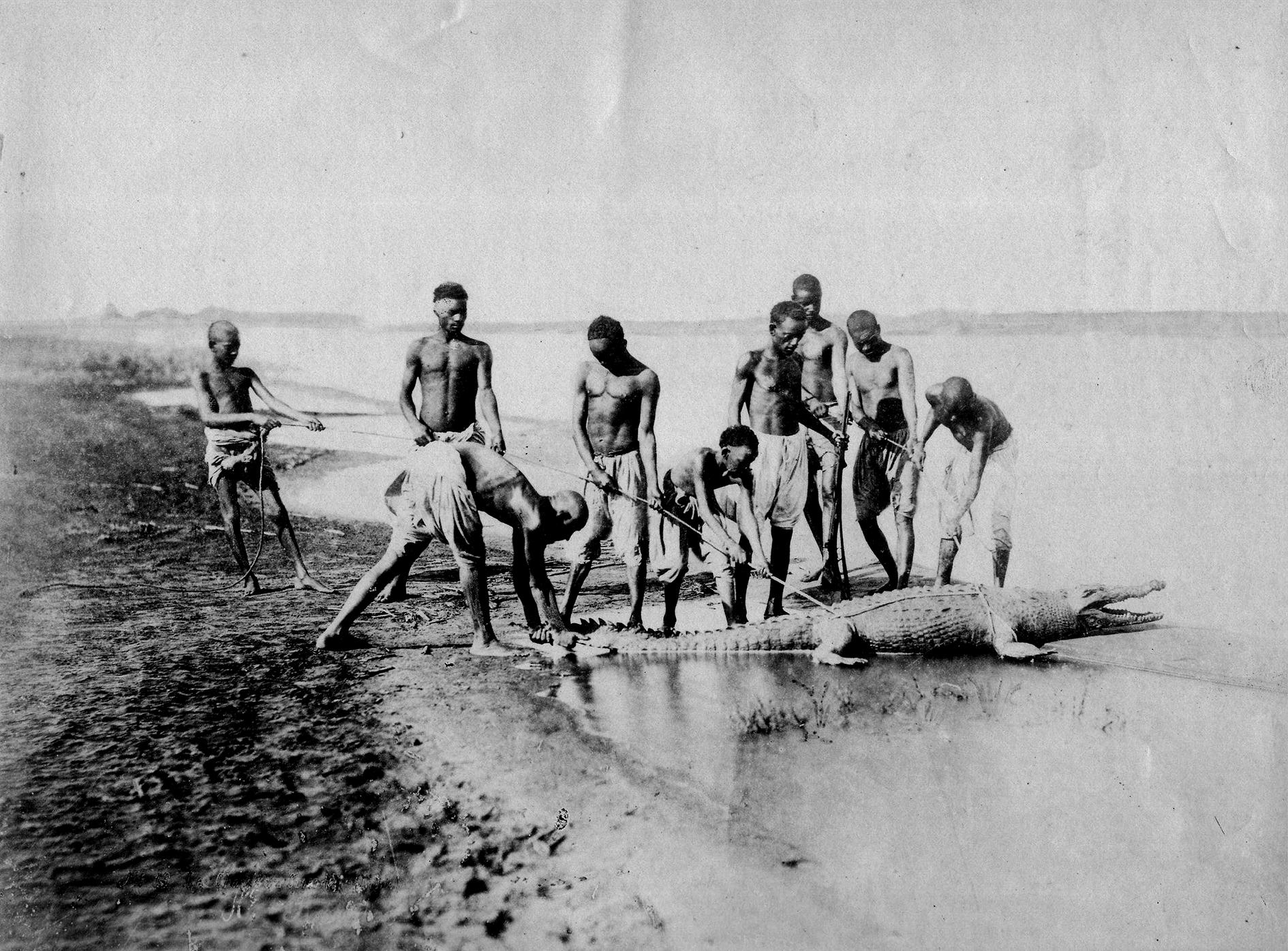 13sobre 518 Bechard chase crocodrile Nubie 1875 25,5x19,5 TARJETON-CATALOGO