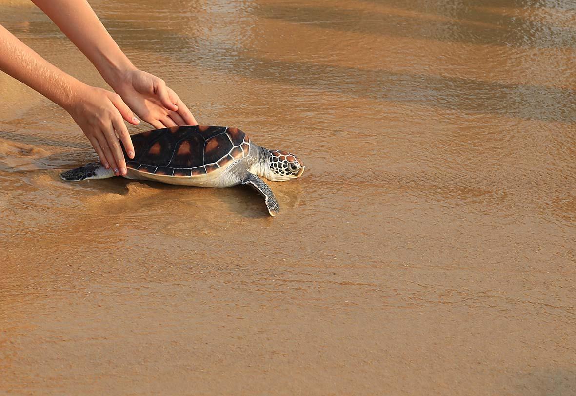 oman Ras Al Hadd 1(Turtle)