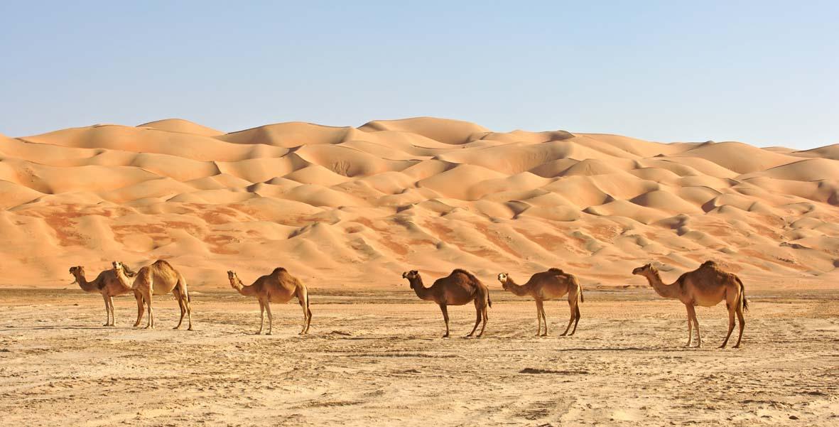 oman wahiba sand 1